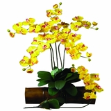 Phalaenopsis Stem (Set of 12) - Nearly Natural - 2044-GD-12