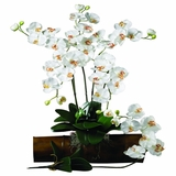 Phalaenopsis Stem (Set of 12) - Nearly Natural - 2044-CR-12