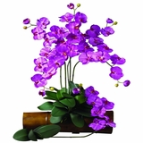Phalaenopsis Stem (Set of 12) - Nearly Natural - 2044-OR-12