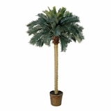 6' Sago Palm Silk Tree in Green - Nearly Natural - 5107