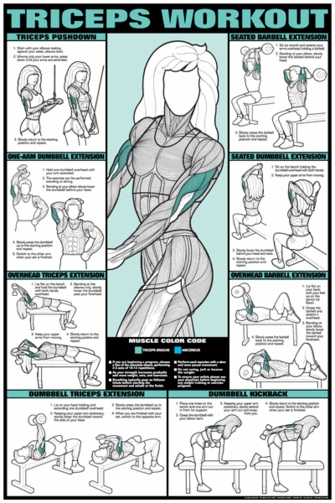 Tricep Workout Poster - Laminated