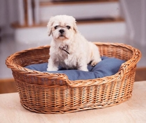 Pet  Basket  &  Cushion (UPS $20)