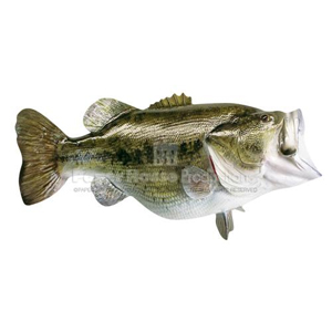 large mouth bass essay Essay about a guide to basic bass fishing techniques - when it comes to bass fishing techniques, there is a plethora of information out there that can be confusing for the beginning angler to sort through.