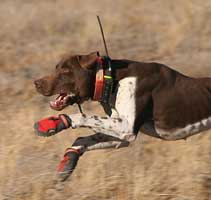Dog Tracking Systems for Hunting Dogs