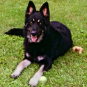 buy discount  Stephanie and Sam's Dog Jack (German Shepherd)