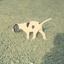 buy discount  Dutchess (English Pointer)