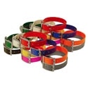 buy discount  Beagle 1 in. Field Trial Dog Collar Combo Pack