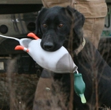 Dokken's Dead Fowl Trainers / Retriever Training Dummies