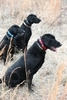 HAVE MORE THAN ONE DOG? Tri-tronics Multi-dog Collars