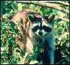 buy  Coon Hunting Supplies
