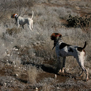 buy discount  Running Multiple Dogs with the Garmin Astro