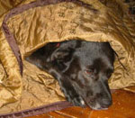 Real Dog Burrow Bedding for Dogs