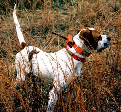 BUYER'S GUIDE: Traditional Tracking Collars and Beeper Collars vs. the Garmin Astro GPS Dog Location System