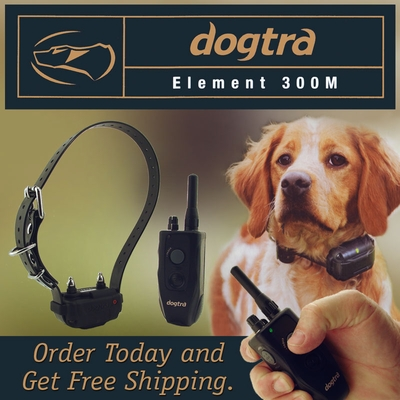 Dogtra Element 300M 1-dog