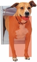 buy discount  How to Measure Your Dog