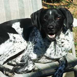 Jennifer's Dog Cash (Bird Dog Mix)