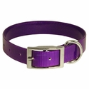 buy discount  Purple Standard Day Glow Collar