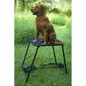 buy discount  Tall Sportstand with Dog