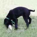 Gun Dog Supply  Shipping & Other Information Page