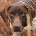 Steve Snell S Dog Training Articles Reviews Amp Buyers Guides