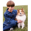 buy  SMALL DOG? Electronic Dog Training Collars, Containment, & Bark Collars for Small Breed Dogs