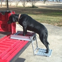 buy discount  Dog Using Truck 'n Buddy 2001