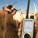 Dog Tracking Radio Collars