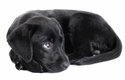 buy  Puppy Training Supplies & Puppy Products