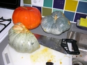 Squash and Pumpkin Tasting