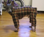 Italian Greyhound Brown Plaid Indoor/Outdoor Bodysuits