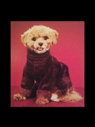 Chloe, a Maltipoo in a size 14 IG!
