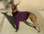 Italian Greyhound Eggplant Nantucket Fleeced Sweater