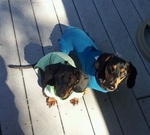Dachshund Rompers