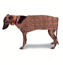 Greyhound Overcoats