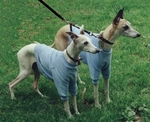 Whippet Azure Blue Lightweight Shirt