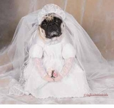 Dog Costumes - Dog Bride Costume - SOLD OUT