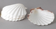 NATURAL BAKING SHELLS SET/4