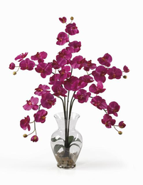 Phalaenopsis Liquid Illusion - Click to enlarge