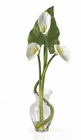 Calla Lilly Liquid Illusion w/Leaves