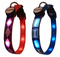 Dog E Glow Lighted Collars