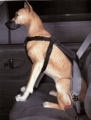 Car Dog Harness Medium (25-50 lbs)
