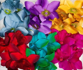 "3.5"" Orchid Flower Hair Clip in 6 Colors Pair"