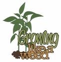 Growing Like A Weed Laser Die Cut