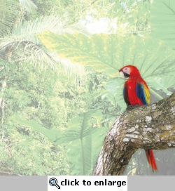 Animal Kingdom: Macaw 12 x 12 Paper