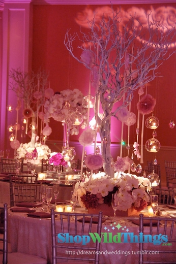 Trees For Weddings, Events & Centerpieces