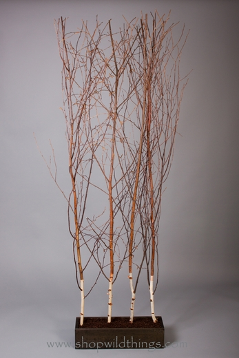 CLEARANCE!  - Birch Tree Room Divider 7'  Tall x 4' Wide - Deluxe Winter Birch