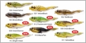 LIVETARGET Lures Walking Frog FGW105T 4-1/8in