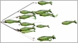 "9er's 38 41"" N.E. Shad Rig Lure"