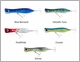 Braid GT Monster Popper Lures