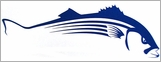 Steelfin Striped Bass Decals - Large